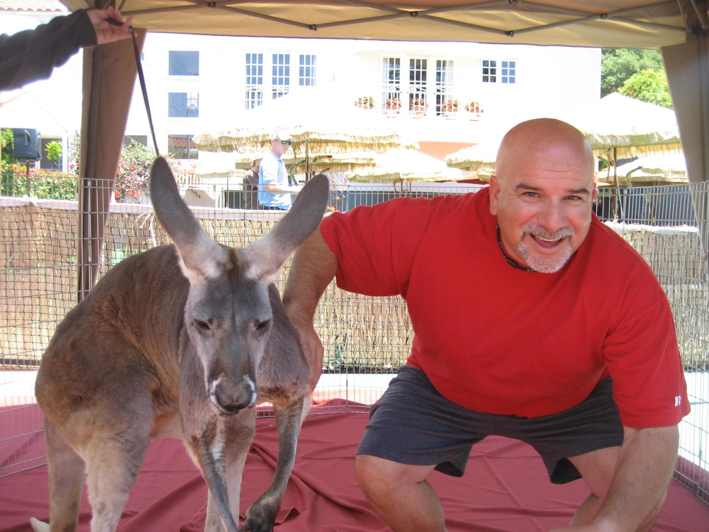 IMG 26632 - Kangaroos