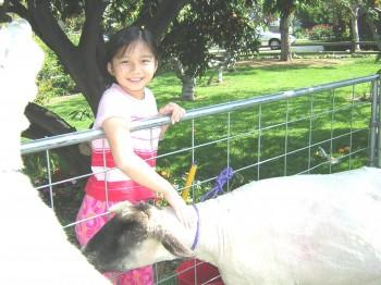 Img2004 04 04 019 350x262 - Petting Zoo
