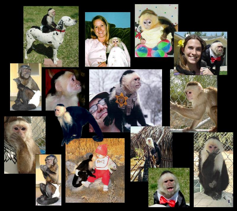 Monkeys1 - Monkeys & Chimpanzees