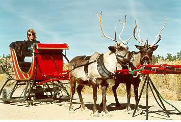 RNDEER2 - Reindeer
