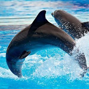 dolphins - Aquatic Shows