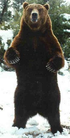 e89b3e0e6bdbc51bc1b90c73a48d793e1 - Bears