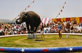 ea2 350x226 - Elephant Rides and Acts