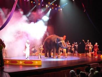 ea33 350x262 - Elephant Rides and Acts
